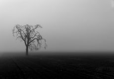 Spooky tree. A lone tree sits eerily in a fog shrouded field Royalty Free Stock Photography