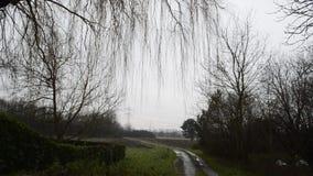 Spooky tree stock video footage