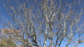 A spooky tree on a sunny day. A scenic moving shot of a spooky tree stock video
