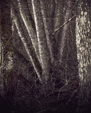 Spooky trees Stock Images