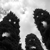 Spooky trees royalty free stock image