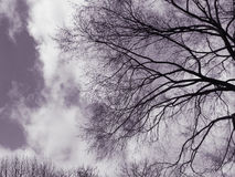 Spooky trees in sky Stock Image