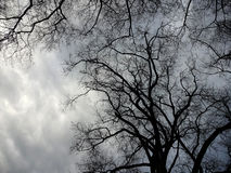 Spooky Trees and Stormy Skies. Spooky tree branches against threatening clouds royalty free stock photography