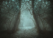Spooky tunnel in the forest through mist Stock Images