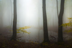 Spooky water inside foggy forest on a gloomy day. Gloomy dark autumn day. Filtered image Stock Photo
