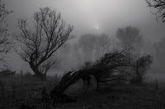 Spooky winter landscape stock photos