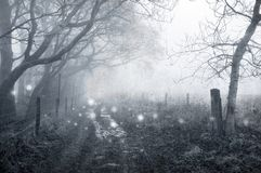 A spooky woodland path in winter with ghostly lights floating along the path. With a grunge, vintage edit. A spooky woodland track in winter with ghostly lights royalty free stock photo
