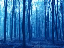 Spooky woodlands. Winter woodlands in Hampshire, blue lighting Royalty Free Stock Photography