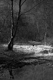 Spooky Woods. Moonlit patch of ground in a haunted woods Stock Photos