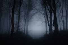 Free Spooky Woods At Night On Halloween Royalty Free Stock Image - 127911296