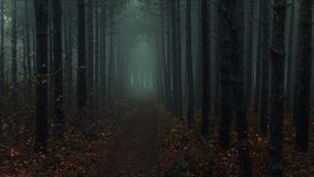 Spooky woods near Montana, Bulgaria stock photos