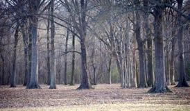 Spooky Woods Scene Royalty Free Stock Photo