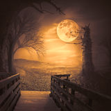 Spooky Woods With Moonligt As Halloween Backdrop Scene Royalty Free Stock Image
