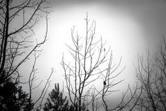 spooky stock afbeeldingen