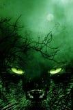 Spookycat3 Fotos de archivo