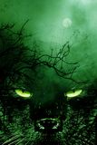Spookycat3 Fotografie Stock