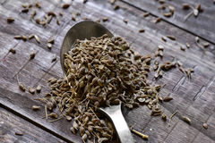 Spoon with anise seeds Stock Photography