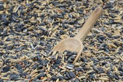 Spoon in bird seed Royalty Free Stock Photo
