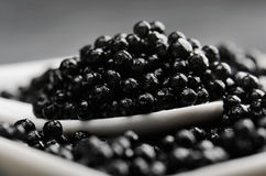 Spoon of black caviar close-up in a white bowl side view stock images