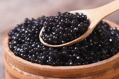 Spoon with black sturgeon caviar macro. Stock Image