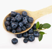 Spoon with blueberries. Ripe blueberries close up on white background stock images