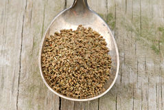 Spoon of Celery  Seed Royalty Free Stock Images