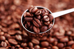 Spoon of coffee beans Royalty Free Stock Photography