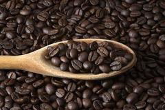 Spoon of Coffee Beans Royalty Free Stock Image