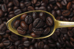 Spoon with coffee grains (Robusta coffee) Stock Image