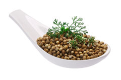 Spoon of coriander seeds, flowers, paths Royalty Free Stock Photography