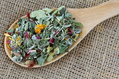 A spoon of dried Herbal tea Stock Photography
