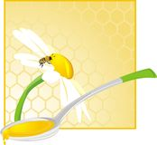 Spoon with floral honey. Illustration Stock Photo