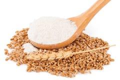 Spoon flour and wheat grain Royalty Free Stock Photo