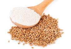 Spoon flour and wheat grain Stock Photo