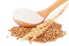 Spoon flour and wheat grain Stock Photos