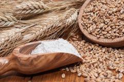Spoon flour and wheat grains Stock Photo