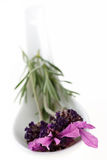 Spoon with fresh Lavender Royalty Free Stock Photo