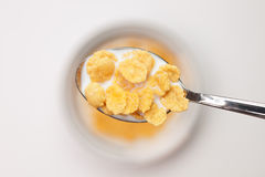 Spoon full of cornflakes close-up Royalty Free Stock Image