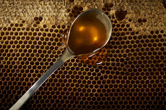 Spoon full of honey on honeycomb Royalty Free Stock Photo