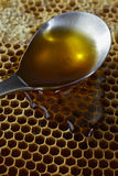 Spoon full of honey on honeycomb Stock Photo