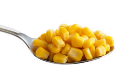 Spoon full of tinned sweetcorn isolated on white. Stock Image