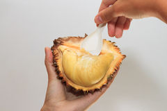 Spoon in hands scooping durian Stock Images