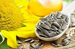 Spoon of kernels on sunflower seeds and oil background stock photos