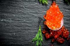 Spoon of red caviar with dill. On black rustic background stock image