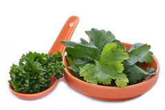 A spoon and saucer of parsley Royalty Free Stock Photography