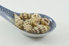 Spoon with shells. Spoon with decorative sea shells Royalty Free Stock Photography