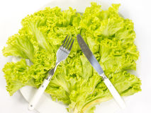 Spoon and silverware green lettuce. On dish Royalty Free Stock Images