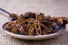Spoon with Star Anise Royalty Free Stock Photo
