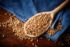 Spoon with whole wheat grains Stock Photos