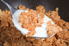 Spoon with yogurt and cornflakes Stock Photos